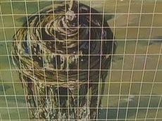 Бронированные воины Вотомы [ТВ] / Soukou Kihei Votoms [52/52](SUB)