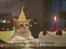 Реклама с котами.